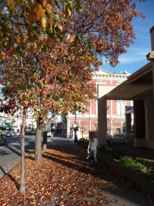 Fall foliage - Petaluma, CA